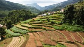 Vattavada Vegetable Farm