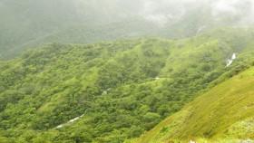 Thekkady hills