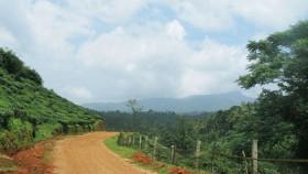 Wayanad Hill Side