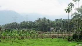 Farmer in paddy field