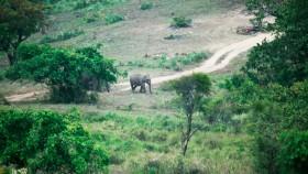 Elephant at nelliyampathy