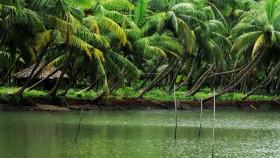 Backwater kasargod