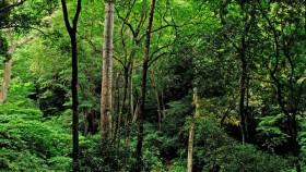 Semtharuni wild life sanctuary