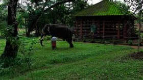 Konni elephant