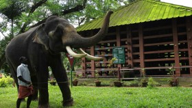 Konni an elephant training
