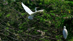 Kumarakom Bird