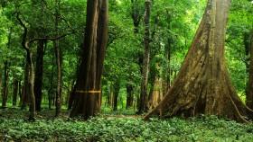 Cannoli plot teak forest