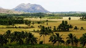 Landscape Palakkad