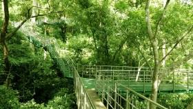 Hanging Bridge at Thenmala