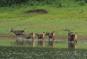 Kerala Wild Life