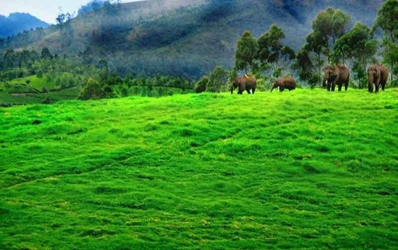 Munnar-Thekkady Combo