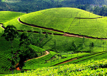Mesmerizing Munnar