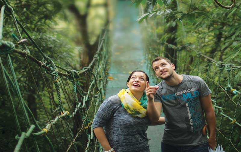 Vythiri Honeymoon Platinum Package wayanad