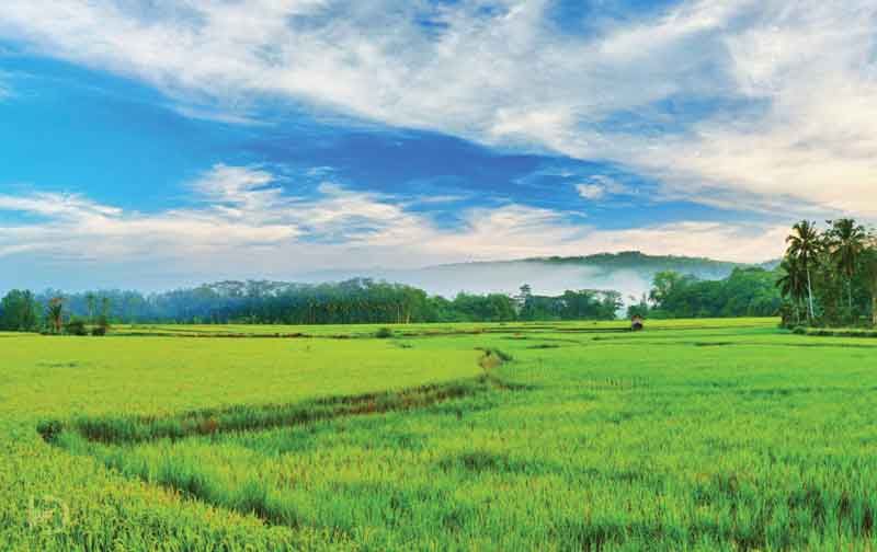 Kerala Greenery Package