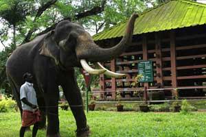 The Konni Elephant Training tourism Centre