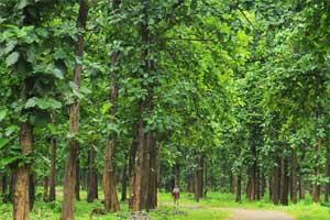 Nilambur teak Forest area