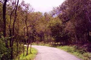 Sandalwood forest in marayoor