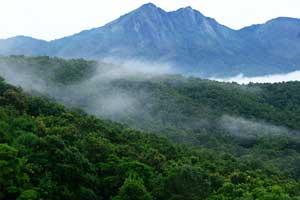 Silent Valley National Park Palakkad