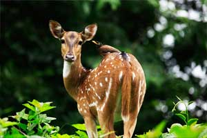 Parambikulam Wildlife Sanctuary palakkad