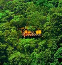 Vythiri Tree house wayanad