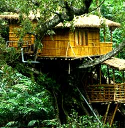 Kerala Tree Houses Tree House Destinations Kerala Kerala