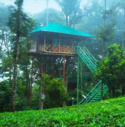 Dream Catcher Tree house munnar