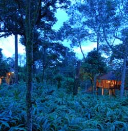 Carmelia Haven Treehouse resorts thekkady