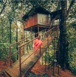 Ela Ecoland Treehouse Munnar
