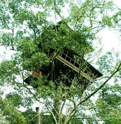Green Magic Treehouse Wayanad