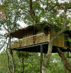Tranquil Treehouse Wayanad
