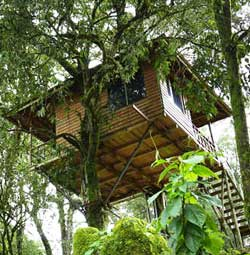 Nature Zone Treehouse  Munnar