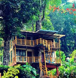 Jungle Jive Treehouse  Munnar