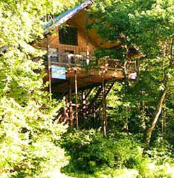 Green Trees Treehouse  Munnar