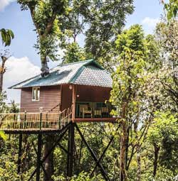 Kaivalyam Retreat Treehouse munnar