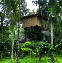 Hiliya Resort Treehouse wayanad