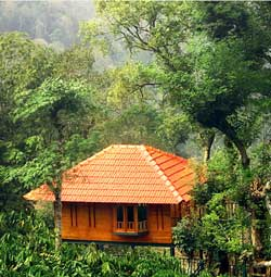 Marmalade Springs Treehouse wayanad